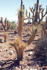 Desert Museum Saguaro NM AZ June 1976.jpg (buddymedbery) Tags: years nationalparks arizona unitedstates saguaronationalmonument 1970s 1976