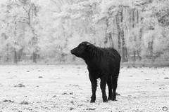 DN9A1495-2 (Josette Veltman) Tags: salland boetelerveld raalte natuur2000 natuur landschap landscape nature wit zwartwit blackwhite blackandwhite netherlands