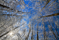 Snow? (Matt Champlin) Tags: winterwonderland winter cold ice trees forest nature outdoors life blue white sun sunshine walking hiking canon 2016 peaceful pristine untouched environment save