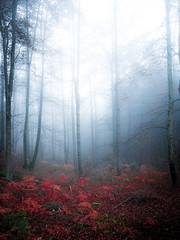 (Nikola Ostrun) Tags: tree trees outdoor nature forest color red blue cold fog foggy mist misty light shadow dark