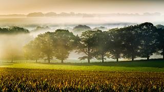 Foggy dawn 2
