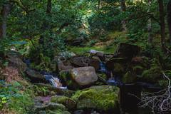Padley Gorge, Peak District National Park (AlexanderLloyd_) Tags: flowers mountain mountains beautiful forest landscape woods woodlands scenery rocks sheep district peak gorge padley