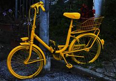 Giallo (BerrutiGiulia) Tags: italy colors yellow italia piemonte giallo cuneo colori piedmont langhe bergolo