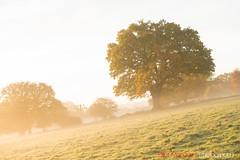 Hatfield_Forest-28 (Eldorino) Tags: park uk morning autumn trees nature forest sunrise landscape countryside nikon britain centre jour hatfield bishops stortford essex hertfordshire stanstead hatfieldforest
