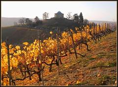 Grabkapelle Rotenberg (almresi1) Tags: autumn landscape vineyard colours stuttgart herbst landschaft weinberg rotenberg badenwrttemberg abendlicht grabkapelle