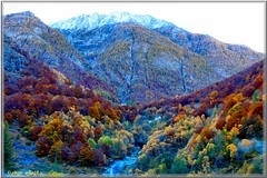 automne 2015 (arno18) Tags: automne landscape switzerland suisse or arbres mines valais gondo