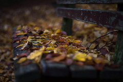 Autumn Poetry (Joe[insanely]) Tags: autumn poetry freiburg blackforest 50mmf14 breisgau badenwürttemberg sundaywalks nikond60