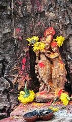 .. (Ramalakshmi Rajan) Tags: india temple nikon worship bangalore idol temples placesofworship idols radhakrishna malleshwaram lifeinindia nikond5000 nikkor18140mm