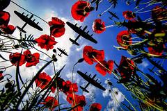 POP0008 (Smart Aviation Art) Tags: poppy poppies poppyfield poppyfields lancaster vulcan avro spitfire hurricane aircraft military bbmf