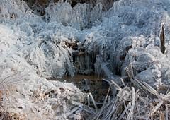 winter wonderland (mishko2007) Tags: korea 1224mmf4 ice icicles