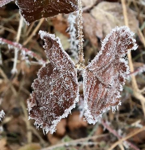 ~~ Der Scharm des Frostes ~~