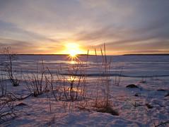 Aurinko laskee (pikkuanna) Tags: oulu 2017 meri sea ranta shore lumi snow auringonlasku sunset