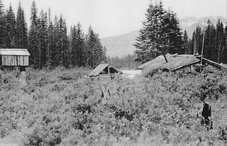 British Columbia Wolf Hunt & Big Game 4