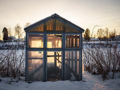 Glowing greenhouse (Helena Normark) Tags: greenhouse oldgreenhouse glowing winter skellefteälven skellefteå västerbotten sweden sverige sonyalpha7 a7 voigtländer cv5015 nokton5015 nokton50mmf15
