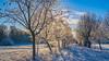 Allee in Winterstarre - alley in torpidity (ralfkai41) Tags: schnee sunny sunrise strasse sonne kälte frost sonnig outdoor licht allee natur cold bäume alley landschaft light road eis landscape sun winter heiter sonnenaufgang nature schwepnitz hdr trees ice wow