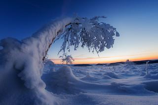 frozen zone