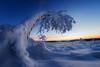 frozen zone (Rainer Schund) Tags: frozen zone eis raureif reif winter fisheye nikon nikond4 schnee morgen morgens 18 wind lichtstimmung blauestunde kalt ice