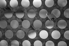 _DSC7311 el primero... (Rodo López) Tags: elbierzo españa explore excapture spain sentimientos sol candados amor castillayleon castillayleonesvida carlzeiss costumbrestradicionespueblos nikon naturaleza nature nostalgia naturebynikon airelibre