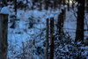 Fence in Winter (*Capture the Moment*) Tags: 2017 backlight bokeh bäume dof depthoffield fence fotowalk landschaften schnee snow sonya7m2 sonya7mii sonya7mark2 sonya7ii sonyfe2890macrogoss sonyilce7m2 tiefenschärfe trees wetter zaun hff fenced friday fencedfriday happyfencedfriday