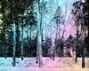 Winter Quiet (bethrosengard) Tags: bethrosengard photomanipulation digitallyenhanced photoart digitalmagic digitalart