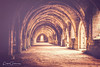 The Vaulted Cloister Ceiling At Fountains Abbey (Peter Greenway) Tags: architecture fountains nt worldheritagesite ruins abbey vaultedceiling abbeyruins england nationaltrust arches fountainsabbey thecloisters monks curves archway stonework cloisters