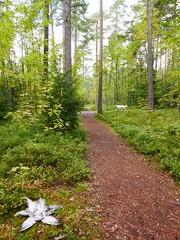 image (strutt_anneli) Tags: finland suomi tampere forest pyynikki metsa autumn syksy bird lintu star dog koira
