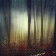 a better place (Dyrk.Wyst) Tags: 2016 bã¤ume deutschland germany landschaft laub licht natur nebel schnee stimmung wald winter wuppertal adventure atmosphere calm creativephotography fog foggy forest kalt landscape leaves light misty mood nature outdoor snow trees twilight wet photomanipulation motionblur backlight abstraction