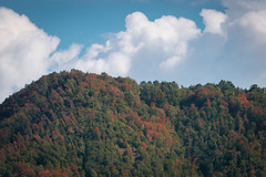 Up there (luigig75) Tags: mountains riservanaturalemontenavegnaemontecervia minimalistic trees fore forest beechwood lazio italia italy 70d canonef70200mmf4lusm