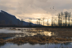 A Few of My Favourite Things (charhedman - on and off) Tags: pittlake pittmeadows trees lake water ilovethisplace ifeelsomuchpeacewhenimhere reflections birds