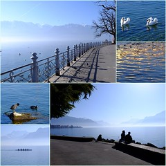Essence of lakeside (zinnia2012) Tags: lakeside collage waterbirds promenade railing shadows lake mountains people swans waterhens rowingboat goldenreflections lac water lacléman zinnia2012 vevey qualitiesofessence aisthebook2017 adventuresinseeing calltoadventure