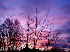 Spring sunset (niknak2016) Tags: sunsetphotography sunsetsilhouette sunset sundown sungoingdown settingsun dusk eveningsky evening skyline sky cloudsandsky pinksky skyphotography skyscape lookingup upabove nature naturalbeauty beautyinnature natural naturephotography picturesque scenery scenics treelife trees bare baretrees