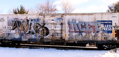 webs - acet (timetomakethepasta) Tags: webs acet freight train graffiti art armn reefer union pacific chilled express benching selkirk new york ld bk whistleblower moniker