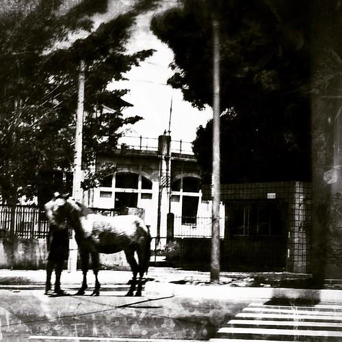 Rapaz e cavalo. #recife #streetphotography #mobilephotography #everydaybrasil #streetphoto #everydaylatinamerica