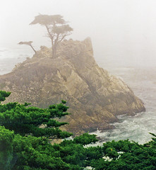carmelca lonecypress pebblebeach 17miledrive fog dgrahamphoto beach coastline cypress waves