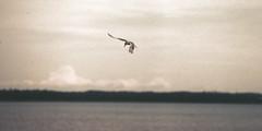 Poised (joeldinda) Tags: vacation sky cloud beach water june waterfront minolta michigan slide 2006 greatlakes scanned horseshoebay upperpeninsula minoltasrt101 lakehuron srt101 stignace saintignace straitsofmackinac august06 2934