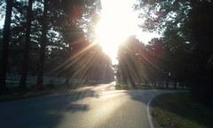 White Fences in Morning Light - HFF!! (maorlando God kept us 2014 leaning on Him 2015) Tags: light usa sun sunlight sunrise am texas creation pasture sunburst sunrays pinetrees sunbeams morningsun hff raysofsunlight forkintheroad harriscounty tomballtx reflectivelight earlyforme whitewoodenfences