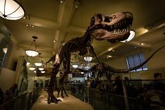 AMNH's T-rex (Malick) Tags: newyorkcity newyork museum unitedstates dinosaur manhattan naturalhistory trex tyrannosaur