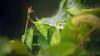les Valseurs (Cool Zoom) Tags: animal eau danse patience absence végétal diamants lenteur romaindidier