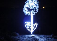 Night Flower (flashpoint-70) Tags: nightphotography light lightpainting flower blackbackground trickphotography