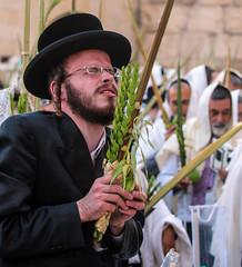 The Black Sheep (ybiberman) Tags: portrait man photography israel intense jerusalem pray devotion jew oldcity bless wailingwall alquds ultraorthodox tallit payot candidstreet suckot fourspecies westermwall