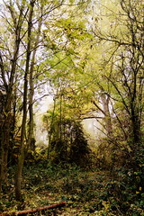 Enchanted forest, where the wild boars live (Zandgaby) Tags: mist tree yellow misty fog forest foggy foliage mystical magical enchanted