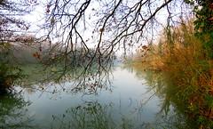 IMG_0003x (gzammarchi) Tags: italia natura ramo paesaggio canale ravenna bosco riflesso marinaromea puntealberete