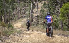 Steep Descent (Neil Ennis) Tags: cycling mtb bnt bicentennialnationaltrail