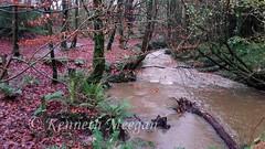 Tintern Woods (Ken Meegan) Tags: wood trees ireland river tinternabbey cowexford saltmills tinternwoods 19122015