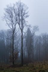 It was quiet (Petr Sýkora) Tags: les mood nature forest wood trees mist fog bleak czech saveearth