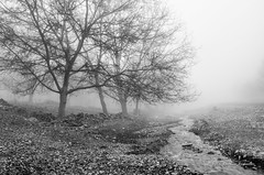 Farewell to Autumn (Esmaeel Bagherian) Tags: منظره اسماعیلباقریان سیاهوسفید درخت رودخانه شاعرانه مه مهآلود 2016 1395 نیکون 18105mm چهارراه باغ پاییز esmaeelbagherian autumn blackwhite blackandwhite iran tree fog foggy poetic