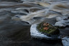 Two leaves in the stream (Storm'sEndPhoto) Tags: 2016 anselsiegenthaler stormsendphotography stormsendphoto d750 finland latokartanonkoski nikon nikonphotography perniö salo sigma1770mmf28 sigmalens suomi