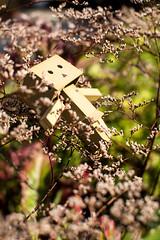 [Danbo] Where are you? (lenanu) Tags: lenanu danbo toy spielzeug outdoor drausen flower blume flowers blumen story geschichte storytelling sad traurig cute süs bokeh schärfentiefe tiefenschärfe japan japanese japanisch floating schwebend light licht shadow schatten primelens festbrennweite nikon 35mm