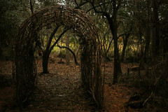 everyday distractions: eaten and drinking (jeneksmith) Tags: autumn green hendersonpoint passchristian canon mississippi nature natural outdoor woods trail arch sticks swamp