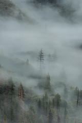 D75_1972 (captured by bond) Tags: fog yosemitenationalpark yosemite nikon capturedbybond stevebond stevebondphotography stevebondphotog stevenbond